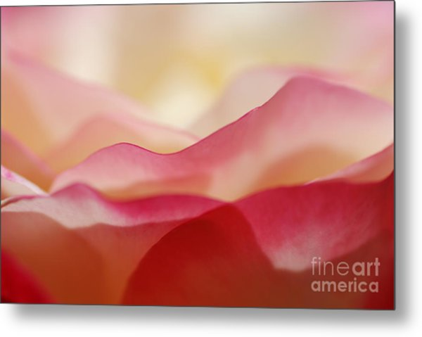 Rose Mountain Metal Print