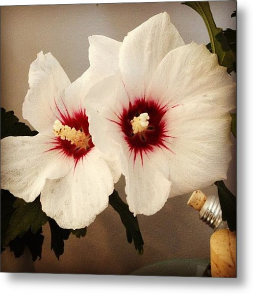 Rose Of Sharon Metal Print