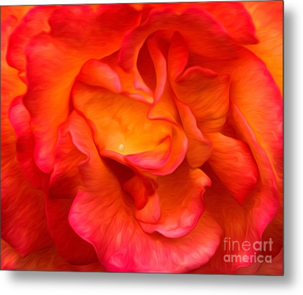 Rose Red Orange Yellow Metal Print