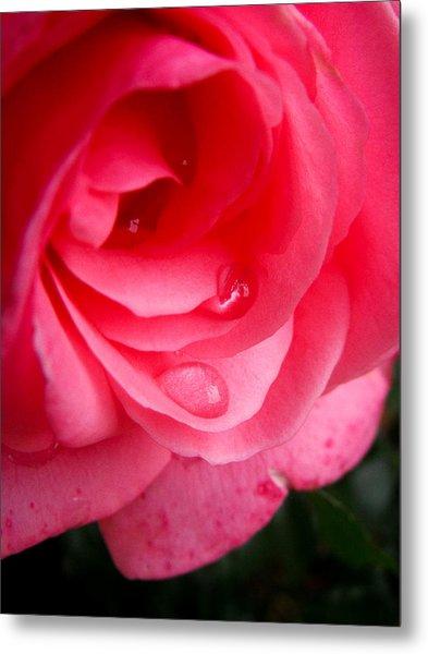 Rose Teardrop Metal Print