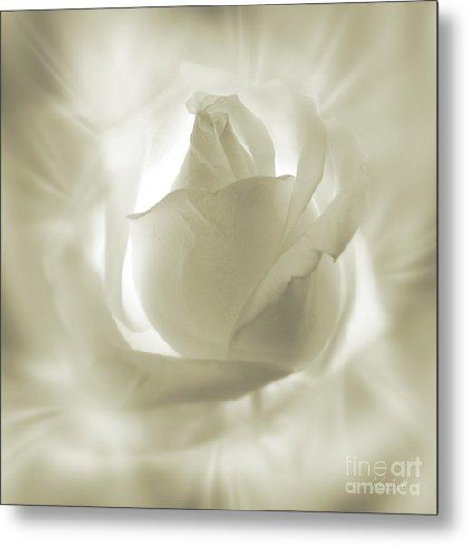 Rose With Glow Metal Print