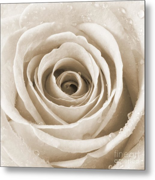 Rose With Water Droplets - Sepia Metal Print by Natalie Kinnear