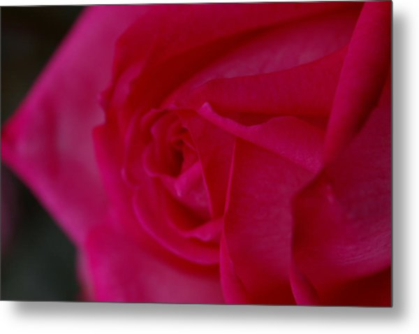 Rose6 Metal Print by Kennith Mccoy