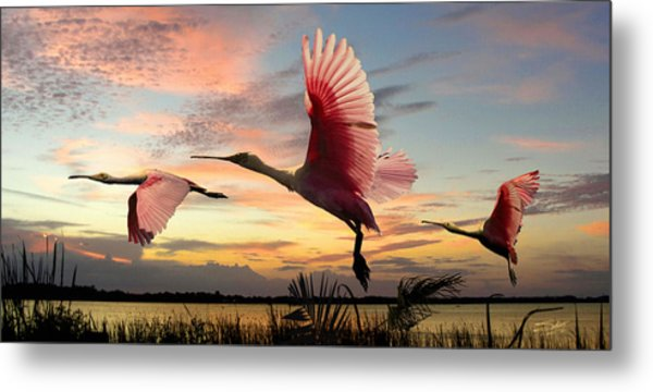 Roseate Spoonbills Of Lake Tarpon Metal Print by M Spadecaller