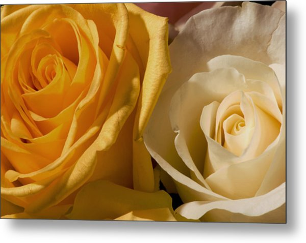 Roses For The Occasion Metal Print by Denis Darbela