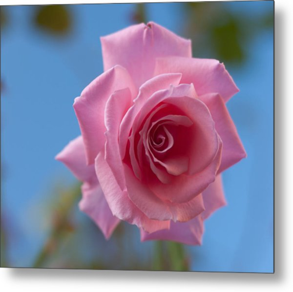Roses In The Sky Metal Print