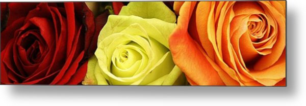 Roses Of Different Colors Metal Print by Bruce Bley