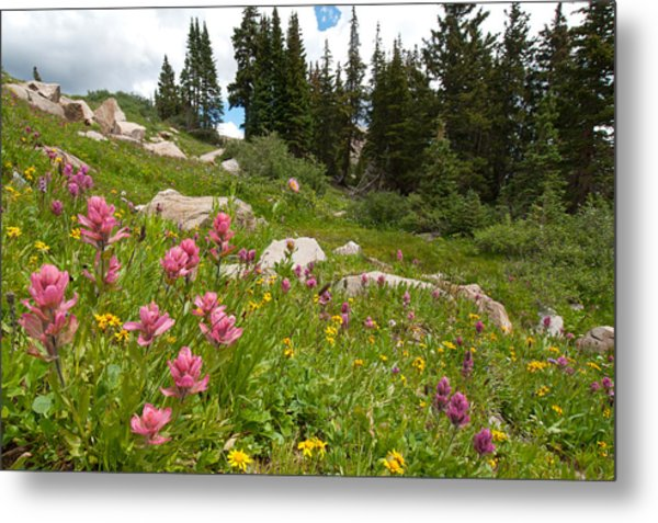 Rosy Paintbrush And Trees Metal Print