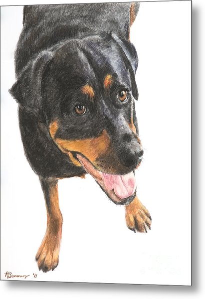 Rottweiler Looking Up Metal Print