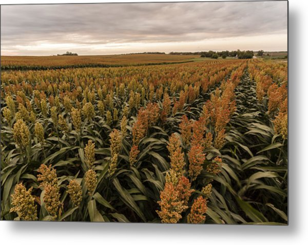 Rows Of Color Metal Print
