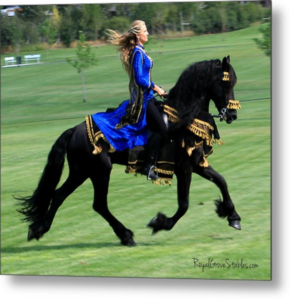 Royal Friesian Metal Print