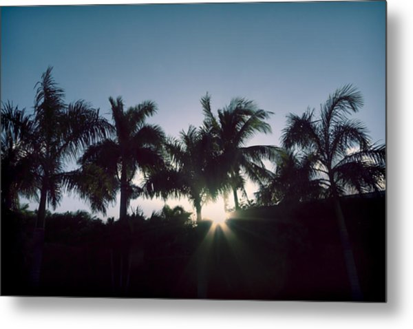 Royal Palm Sunset Metal Print