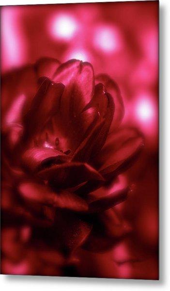 Ruby Red  Dahlia With Bokeh Metal Print