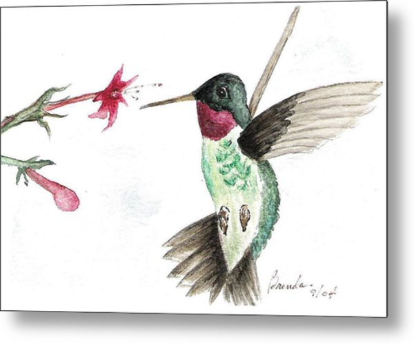 Ruby Throated Hummingbird Metal Print by Brenda Ruark