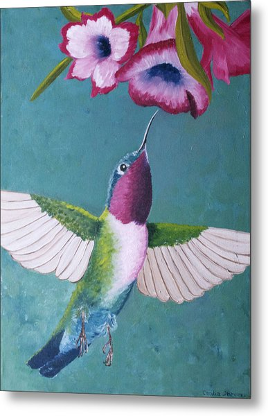 Ruby-throated Hummingbird Metal Print by Cecilia Stevens