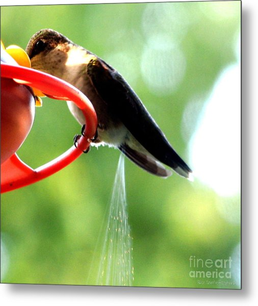 Metal Print featuring the photograph Ruby-throated Hummingbird Pooping by Rose Santuci-Sofranko
