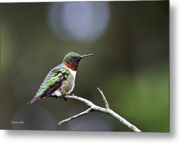 Ruby Throated Hummingbird Spotlight Metal Print