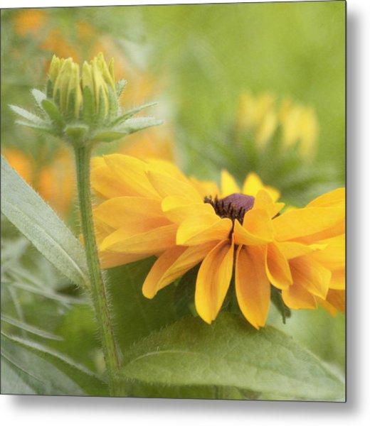 Metal Print featuring the photograph Rudbeckia Flower by Kim Hojnacki