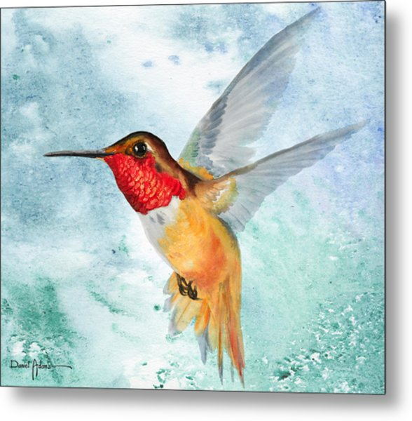 Da199 Rufous Humming Bird By Daniel Adams Metal Print