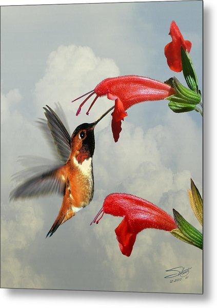 Rufous Hummingbird And Wild Flower Metal Print