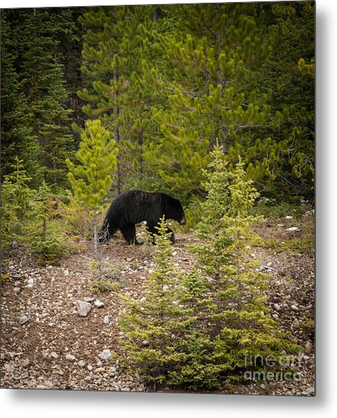 Running Bear Metal Print
