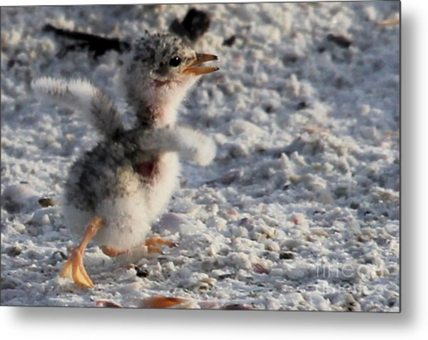 Running Free - Least Tern Metal Print