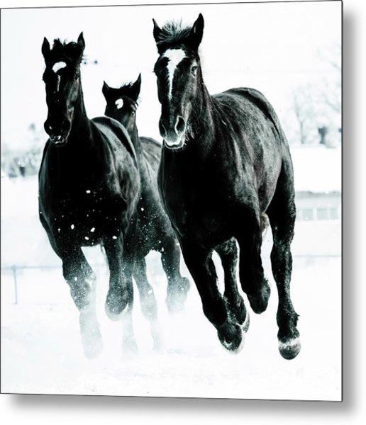 Running Horses Metal Print by Makieni's Photo