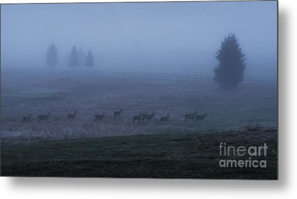 Running In The Mist Metal Print