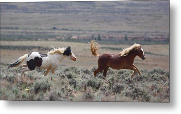 Running Mustangs Metal Print