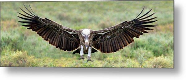 Ruppells Griffon Vulture Gyps Metal Print