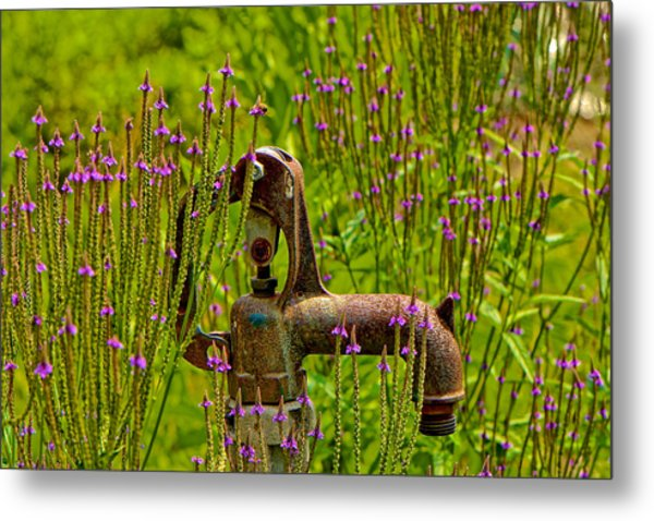Rustic Water Metal Print by Kathi Isserman