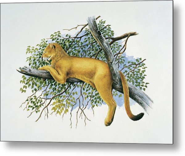Saber Tooth Lion Metal Print by Deagostini/uig/science Photo Library