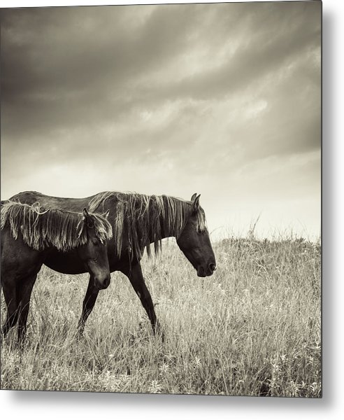 Sable Island Horses Metal Print by Jewelsy