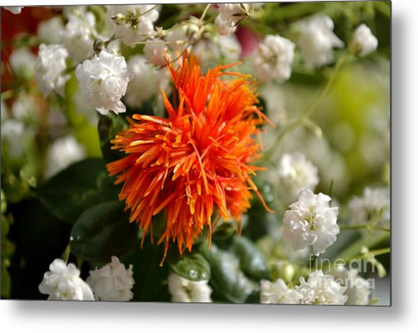 Safflower Amongst The Gypsophilia Metal Print