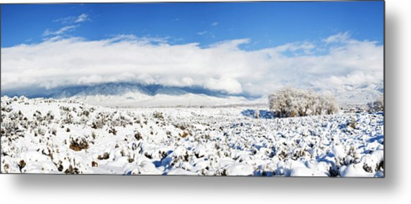 Sage Covered With Snow With Taos Metal Print