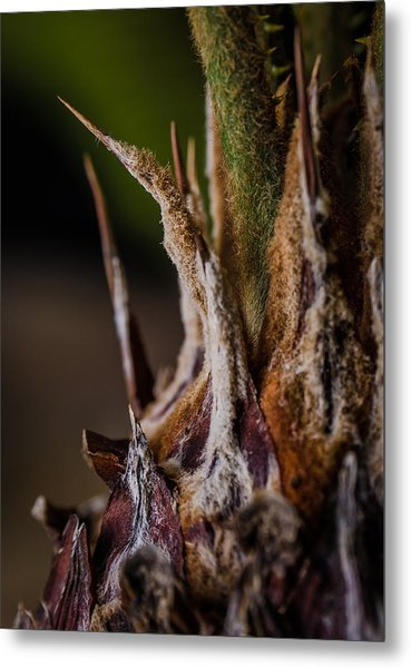 Sago Palm 1 Metal Print