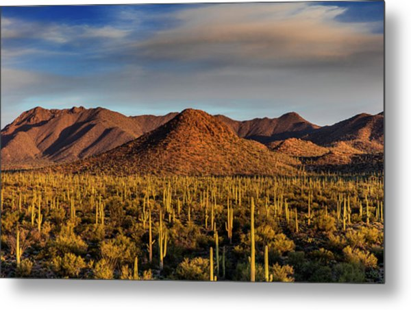 Saguaro Cactus Dominate The Landscape Metal Print by Chuck Haney