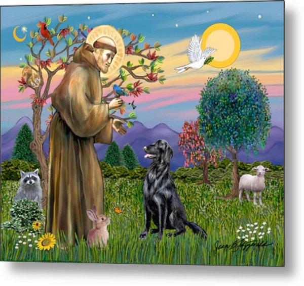 Saint Francis Blesses A Flat Coated Retriever Metal Print