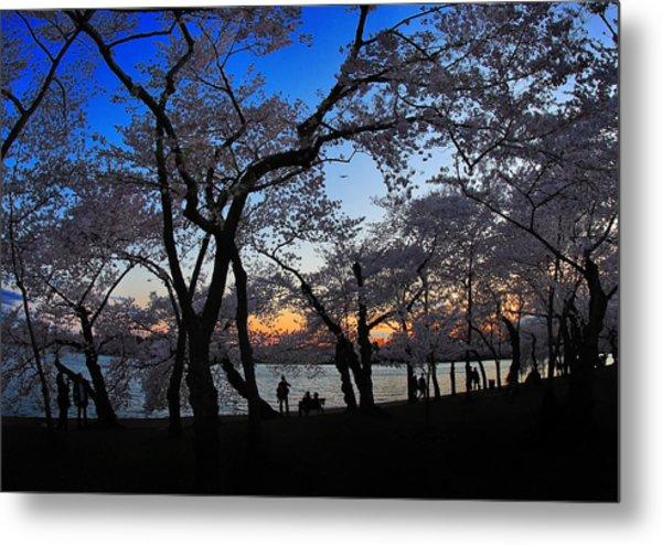 Sakura's Twilight Metal Print by SCB Captures