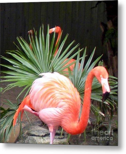 Salmon Flamingos Metal Print