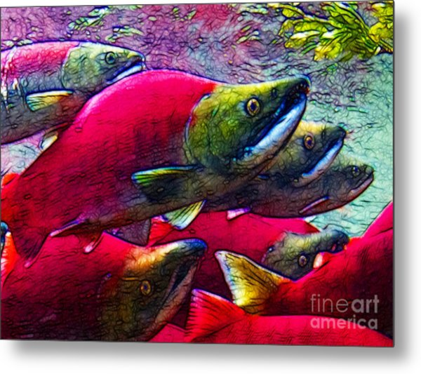 Salmon Run Metal Print by Wingsdomain Art and Photography