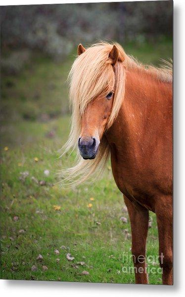 Salon Perfect Pony Metal Print