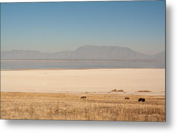 Salt Lake Bison Metal Print