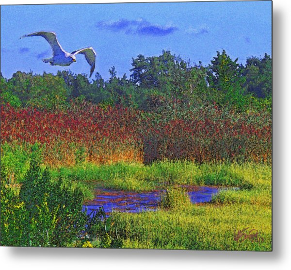 Salt Marsh Gull Metal Print