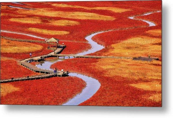 Salt Pond Metal Print by Tiger Seo