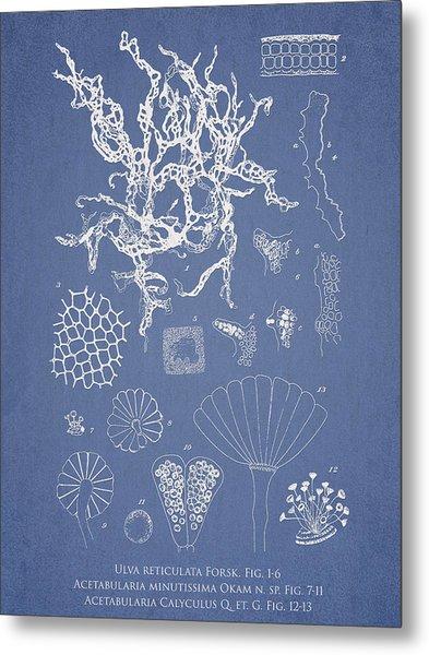 Salwater Algae Metal Print