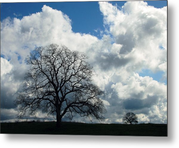Same Tree Many Skies 13 Metal Print