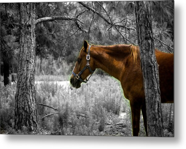 Samson On A Stroll Metal Print