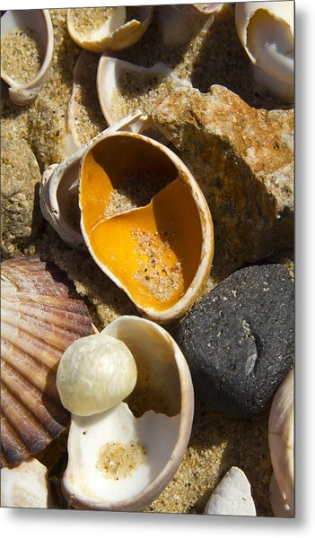 Sand Covered Shells Metal Print by Eugene Bergeron