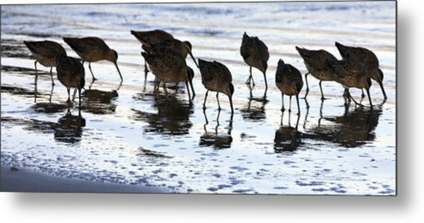 Sand Pipers Reflected Metal Print
